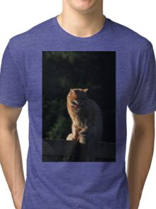 Ginger cat snarling on garden fence Tri-blend T-Shirt