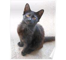 Salem the cat Poster
