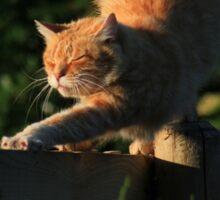 Ginger cat stretching on garden fence Sticker