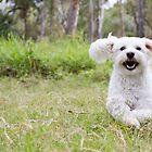 Puppy Love by Jennie Gardiner