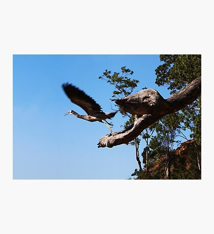 The bird eating Monster Tree Photographic Print