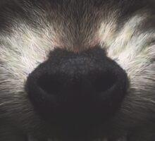 Rocket Raccoon Sticker