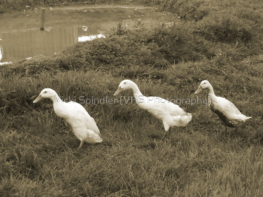 Follow The Leader! by Vicki Spindler (VHS Photography)