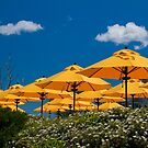 USA. Maine. Bar Harbor. Yellow Umbrellas. by vadim19