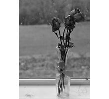 Rose's Dying Wish Photographic Print