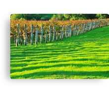 vineyard in early autumn Canvas Print