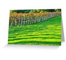 vineyard in early autumn Greeting Card