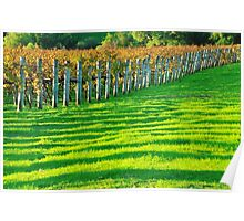 vineyard in early autumn Poster