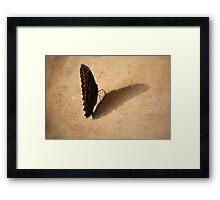 Butterfly Mirror in Shadow Framed Print
