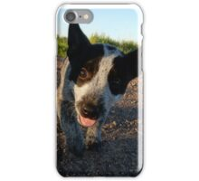 Zip the Blue Heeler iPhone Case/Skin