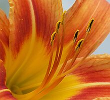 Up Close and Personal (day lily) by nastruck