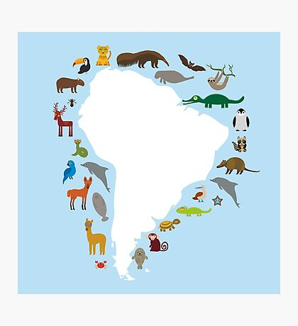 South America White Map with Animals Photographic Print