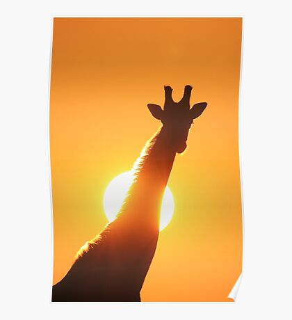 Giraffe Silhouette - Golden Sunset African Wildlife Poster