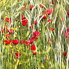 Red Corn Poppies by taiche