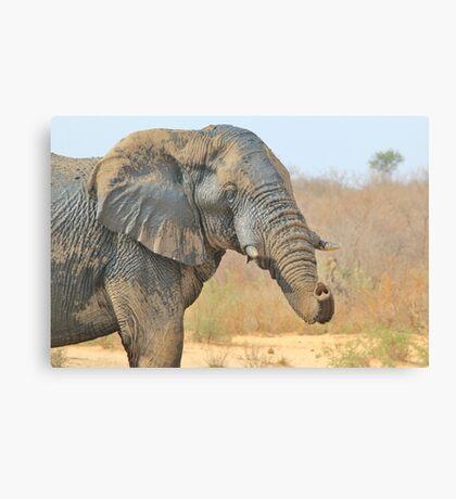 Elephant Bull - Beautiful Mud - African Wildlife Canvas Print