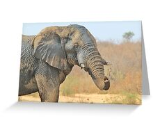 Elephant Bull - Beautiful Mud - African Wildlife Greeting Card