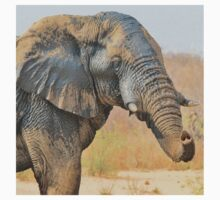 Elephant Bull - Beautiful Mud - African Wildlife Kids Clothes