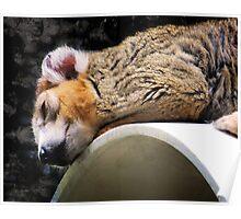 Crowned Lemur Poster