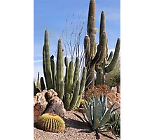 Saguaros and Such Photographic Print
