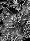 B Leaf by Yampimon