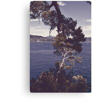 Inseparable trees Canvas Print