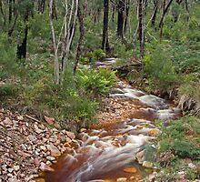 Little Stream flows through the Grampians National Park by Matthew Burniston