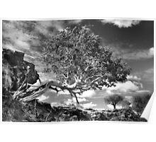 Life among the rocks Poster