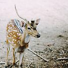 Oh Deer! by Jessica  Lia