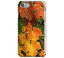 Autumn colors in the vineyard iPhone Case/Skin