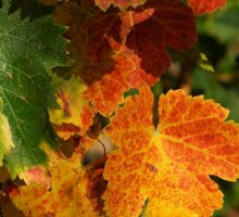Autumn colors in the vineyard Sticker