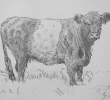 Belted Galloway Cow Pencil Drawing by MikeJory