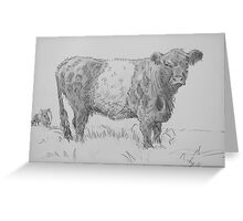 Belted Galloway Cow Pencil Drawing Greeting Card