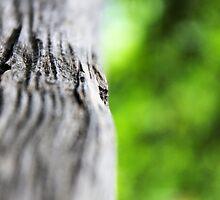 wooden rail by Norbert Karpen