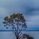1102 The Mangrove by DavidsArt