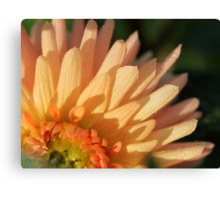 Dahlia named Embrace Canvas Print