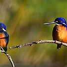 the king fisher of two by houenying