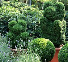 topiary  of the garden  by mrivserg