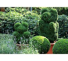 topiary  of the garden  Photographic Print