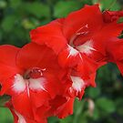 Red Gladiola by Linda  Makiej