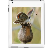Brown Argus Butterfly iPad Case/Skin