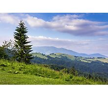 tree on the edge of clearing in mountains Photographic Print