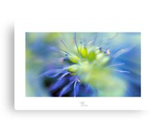 Colour Burst Canvas Print