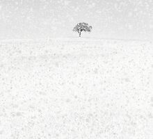 Snow Scape by Andrew Bret Wallis
