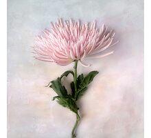 Pretty Pink Mum Photographic Print