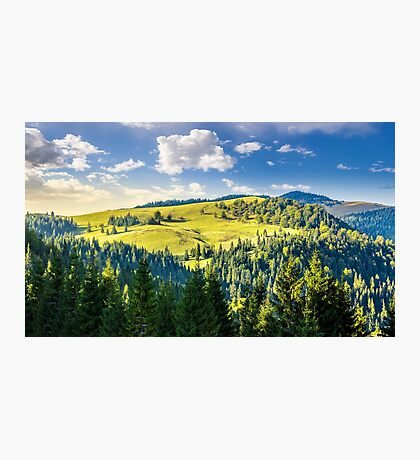 coniferous forest on the hill Photographic Print