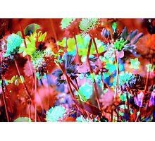 Secret Garden XVII Photographic Print