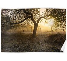 trees in fog on the meadow Poster