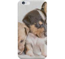 Three Collie Puppies iPhone Case/Skin