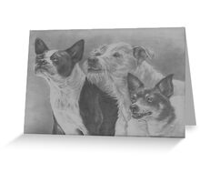 Terrier Trio Greeting Card