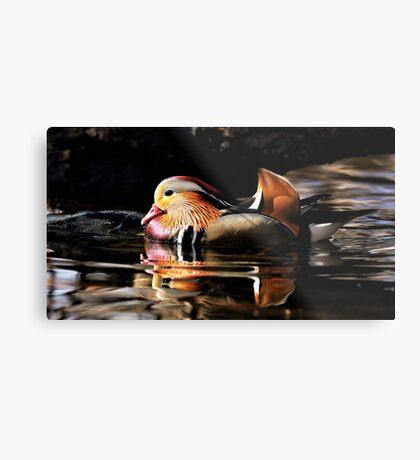 Male Mandarin Duck Metal Print